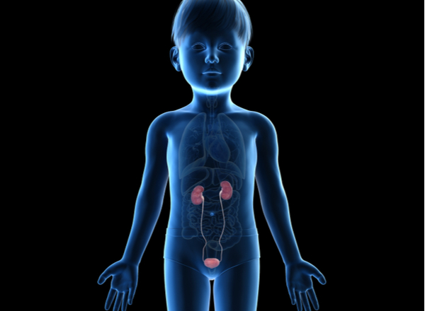 Ουρολοίμωξη με πυρετό: Πότε μπορεί να προκαλέσει μόνιμες βλάβες